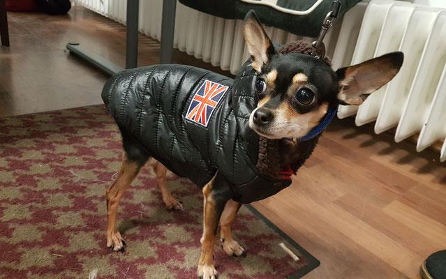 Weil er so fror bekam auch er ganz spontan ein neues Mäntelchen.