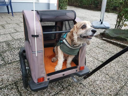Ein Fahrradanhänger für Toby