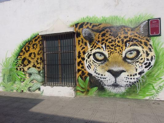 Jaguar, Merida, Mexico, 2016