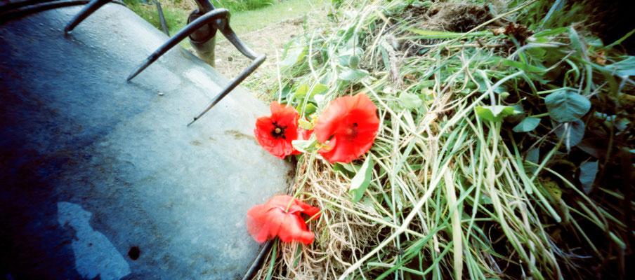 Au potager, Le sauvage tas de compost, 2009, L88 cm x H47 cm, 1/30,  © Annick Maroussy