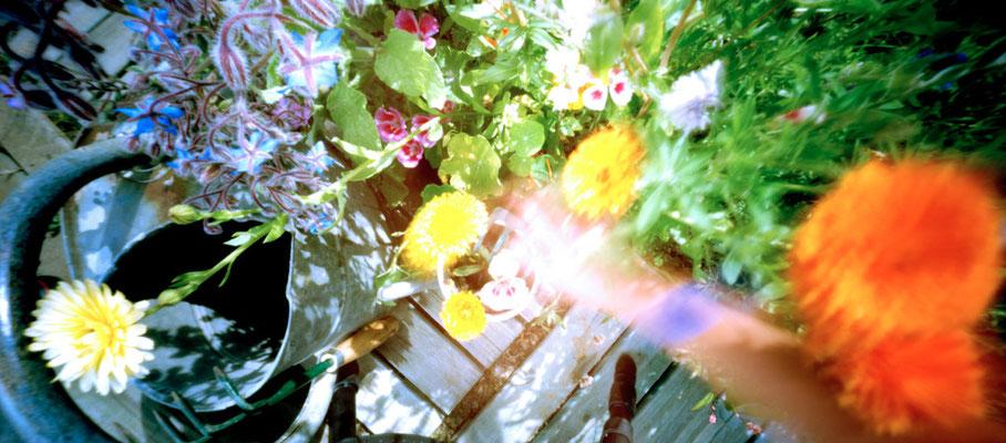 Au potager, Fouillis inextricable coloré, 2009,  L88 cm x H47 cm, 1/30,  © Annick Maroussy