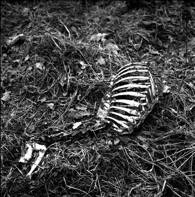 Dead Deer I