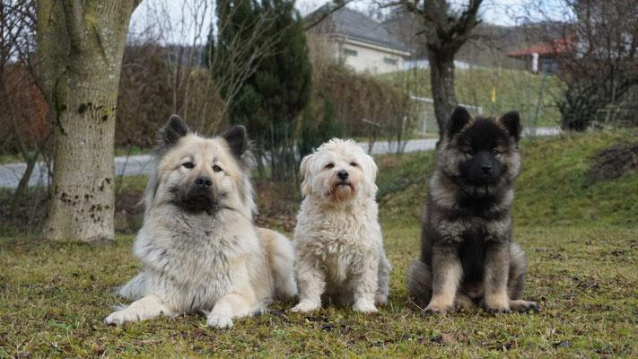 Angel vom Hametwald, Sammy & Feebee