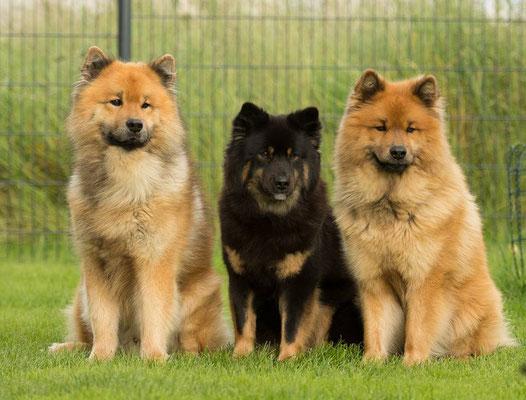 Azou, Amicelli und Hiron