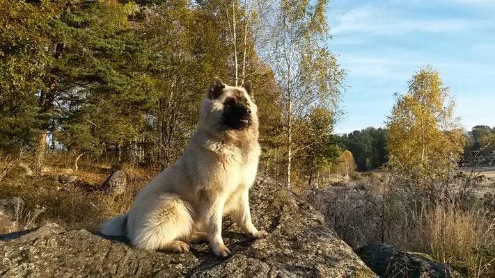 Herbst in Schweden :)