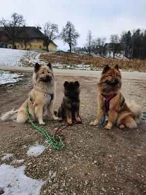 Angel vom Hametwald, Feebee & Athina vom Hametwald