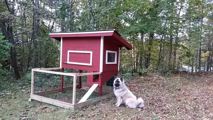Die Hühner können einziehen!!