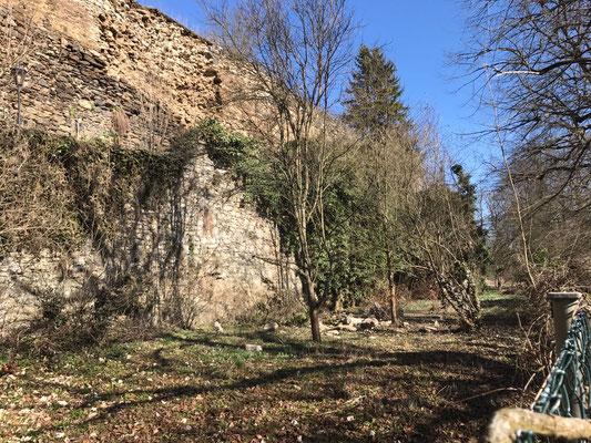 Betroffen ist der Frohner-Garten unterhalb der Stadtmauer. (Foto: Mathias Häckel)