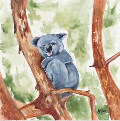 Koala (AUS)