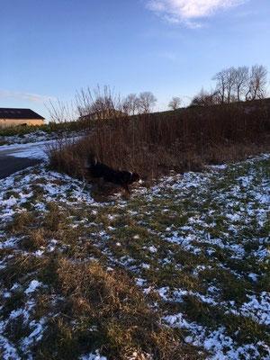 Sofort ohne zu zweifeln auf das Feld fernab von Wegen abgezweigt