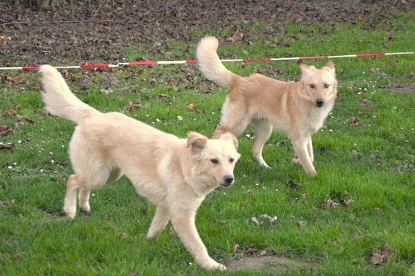Nelli & Sunny