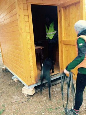 Nach ein paar Rundgängen - doch für die Hütte entschieden  :)   - Lucky -