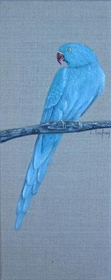 """""""Perruche bleue d'Asie à collier"""" - acrylique - 20 x 50 cm"""