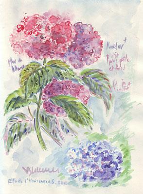 Hortensias, réf. FL007 - vente reproduction