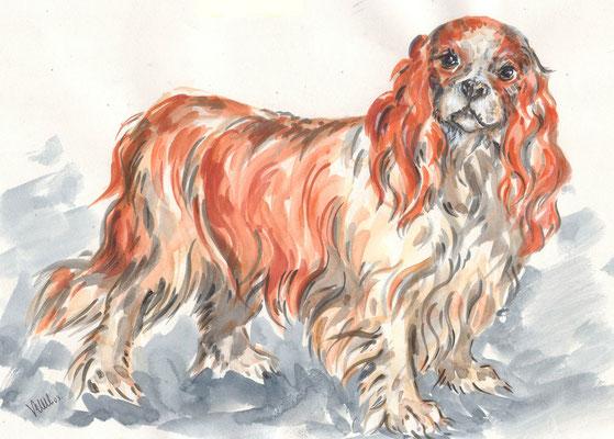 King's Charles, Réf CIE002 - vente reproduction - portrait chien sur commande