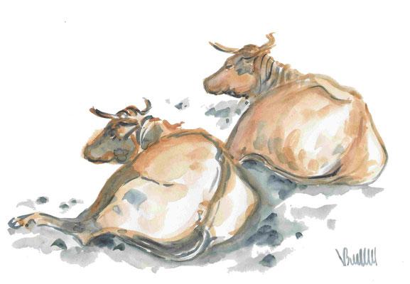 Vaches, châleur de l'été - réf VAC010 -