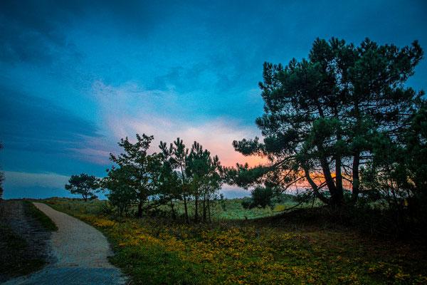 ' Het pad naar het wad'