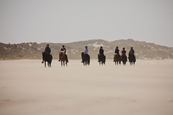 Paarden en harde wind op Vlieland