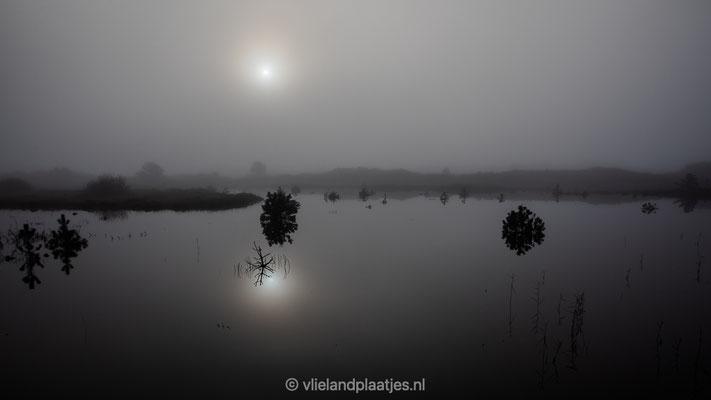 'misty Cranberryfield'