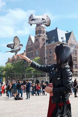 ' Dam square pigeons'