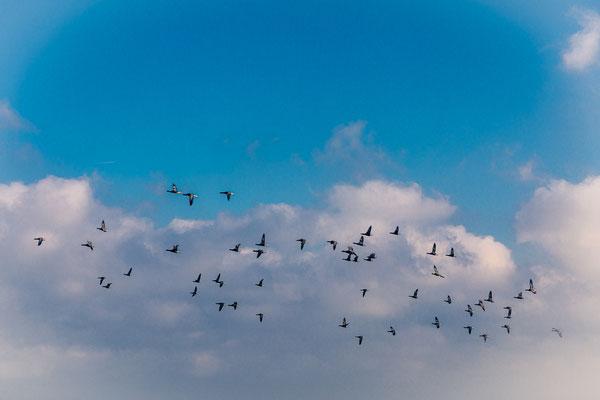 'Vogelvlucht boven het wad'