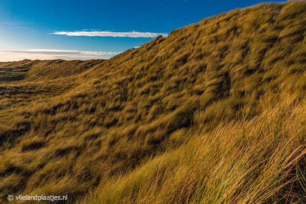 'Duinpracht Vlieland'  De steile duinen langs het Veenpad Vlieland.