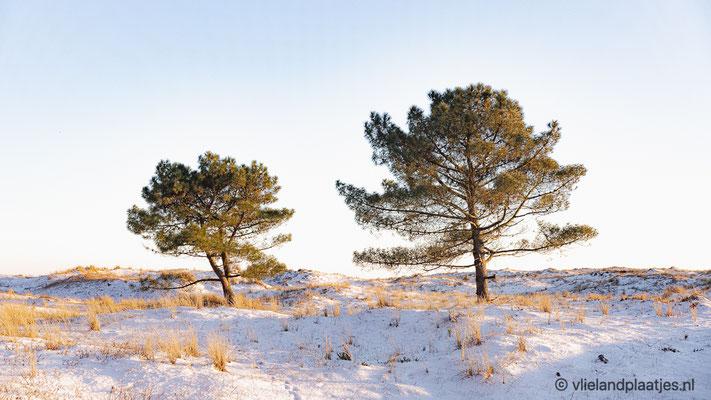 'Winter Wonderland Vlieland II'