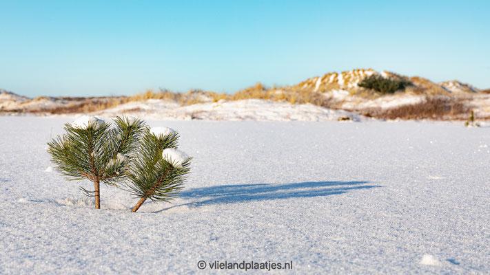 'Winter Wonderland Vlieland I'