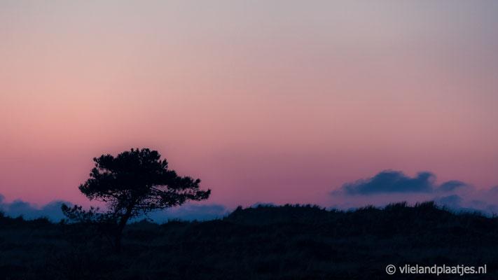 'Boomsilhouet Zwarte Lid vanaf de Waddenzee'