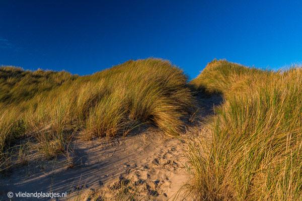 'Duingolven Vlieland'   De steile duinen langs het Veenpad Vlieland.