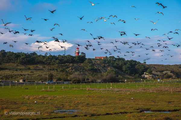 'Birds Vlieland'