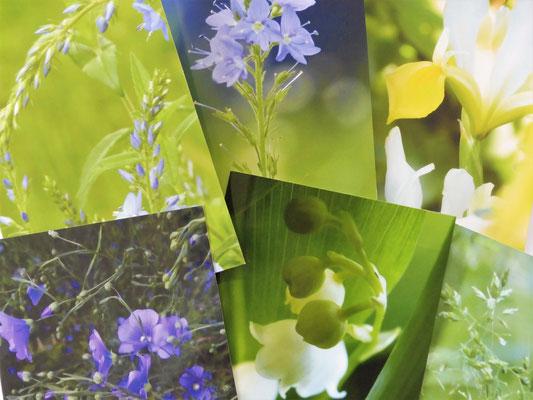Klapp-Postkarten - Edition 02 Sommer