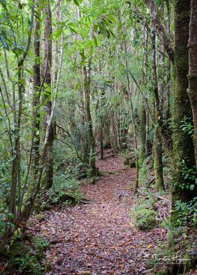 Der Nationalpark Chiloé ist 43.057 ha groß und liegt in Chile in der Región de los Lagos. Der Nationalpark liegt auf der Insel Chiloé