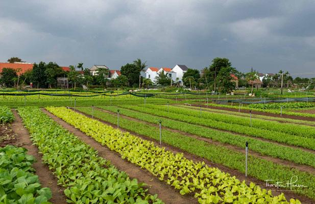 Gemüsegärten in der Nähe von Hoi An