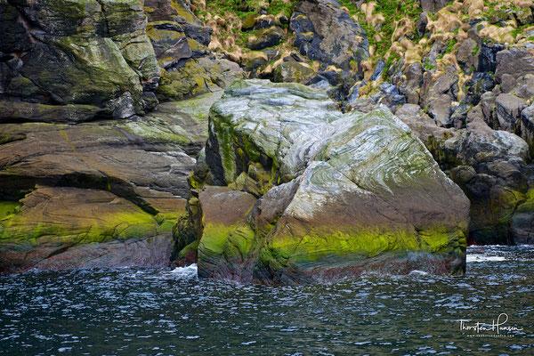 Die Anzahl und Vielfalt der Vögel sind groß. Besonders ist auch, dass der Stappan so nahe beim Festland liegt. Nur wenige Vogelfelsen in Europa sind für Reisegruppen so leicht erreichbar. Der Gjesværstappan ist bestimmt ein Gewinn auf Ihrer Reise zum Nord