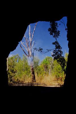 Rauchender Baum im Kakadu NP