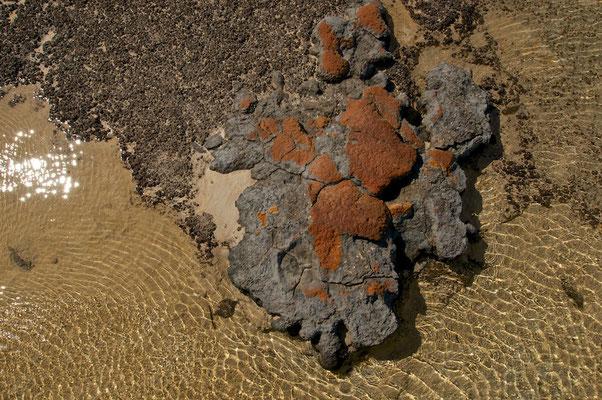Strohmatoliten im Hamelin Pool