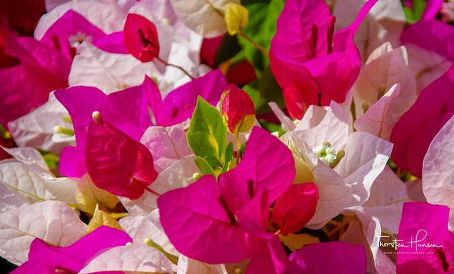 Es wird berichtet, der Garten sei vom Maharana selbst als Geschenk an die Königin und zur Benutzung durch ihre 48 Hofdamen konzipiert worden.
