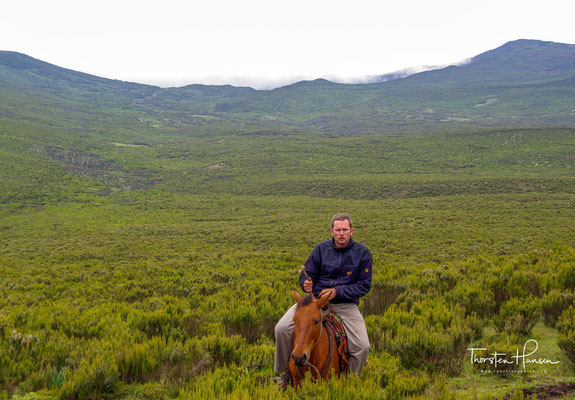 After breakfast continue trekking full day to Duro 2680 m asl. From the Duro forest camp it is possible to continue the horse trekking to the adjacent Bale Mountains National Park