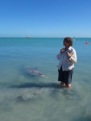 Delfinfütterung in Monkey Mia