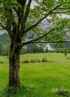 Der Große Ahornboden liegt am Talschluss des Rißtales, dem Enger Tal, kurz vor der Ortschaft Eng zwischen 1080 und 1300 m ü. A. im