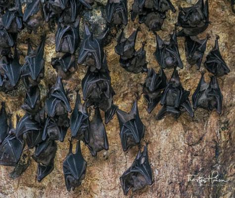 Fledermaushöhle Goa Lawah undes soll hier einige giftige Schlangen geben.