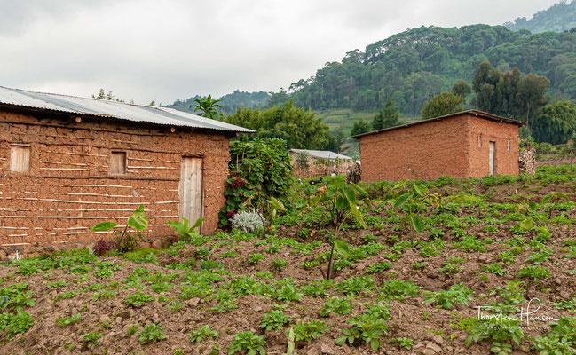 Landwirtschaft am Rande des Nationalpark Virunga. Der Vulkan-Nationalpark ist ein etwa 13.000 Hektar großer Nationalpark im Nordwesten Ruandas.
