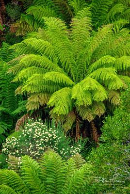 Seit 1989 gehört der Park zum UNESCO-Welterbe Tasmanische Wildnis. Das Gebirge ist nach dem Harz in Norddeutschland benannt.