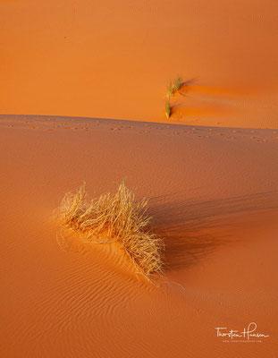 Dünen mit Wüstengräsern