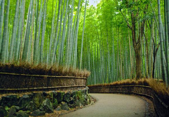 Arashiyama Bambus Wald in Kyoto