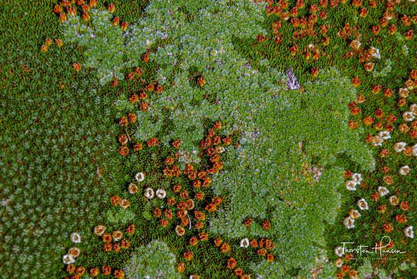 Aufgrund der Vielgestaltigkeit der Landschaft umfasst die Vegetation ein facettenreiches und reizvolles Mosaik von Vegetationsgesellschaften mit einer Spannweite von Regenwäldern bis zu Grasländern.