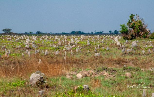 Termitenhügel in der Trockenzeit
