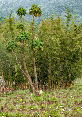 Zunächst wurde nur ein kleines Gebiet um Karisimbi, Visoke und Mikeno zum Nationalpark erklärt, um die hier lebenden Gorillas vor Wilderei zu schützen.
