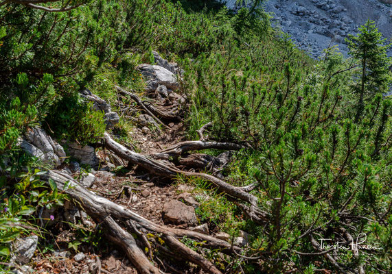 Über Stock und Stein und Wurzelwege geht es weiter durch das Val Corpassa
